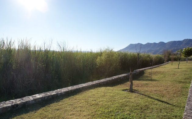 No avanza la disminución del volumen del tular en San Antonio Tlayacapan