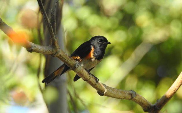 Cumplen un año observando aves en la Ribera