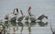 Se encuentra Lago de Chapala al 73 por ciento de capacidad