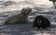 Por fin entra en vigor reglamento contra el maltrato animal