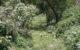 Presenta 80 por ciento de avance la limpieza de arroyos en Chapala