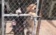 Update on the uproar over the dog shelter in West Ajijic