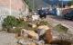 Para rehabilitar banqueta, talan 15 árboles en El Chante